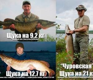 Путин-и-щука